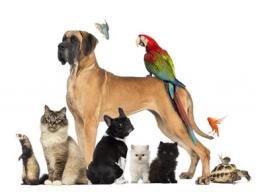 cdVet Haustiersprechstunde - Thema: Übergewicht bei Hunden und ihre Folgen