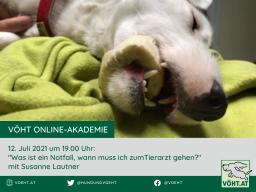 Webinar: Was ist ein Notfall, wann muss ich zum Tierarzt gehen?