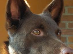 Webinar: Intuitive Energiearbeit für den Hund - Teil 1