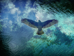 Webinar: Den Zeitgeist 2020 verstehen durch Inspiration, Intuition und Bewusstwerdung 4. Teil
