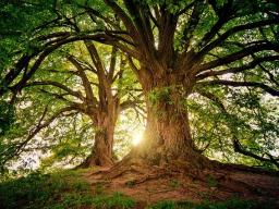 Webinar: Die Weisheit der Bäume - Komplementär-Medizin mit der Baumheilkunde