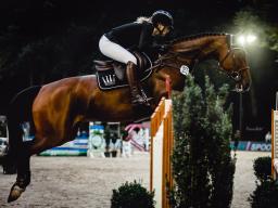 Webinar: Pferde in Bewegung - Knackscharf & in Action