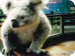 Webinar: Australien Webinar - Ganz Australien