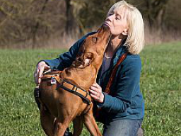 Webinar: Mentaltraining für Hundebesitzer