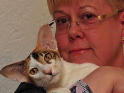 Webinar: Wenn die Katze älter wird