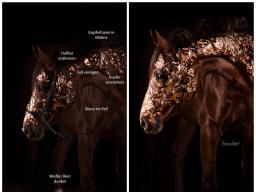 Webinar: Bildbearbeitung für Pferdefotografen - Lightroom & Photoshop