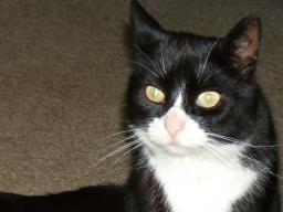 Webinar: Räuchern für Tiere - Hund & Katze