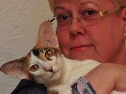 Webinar: Futter für die Katze