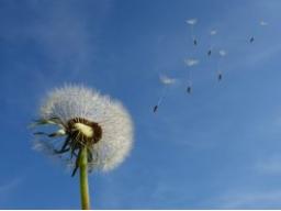 Webinar: Folge Deinen Träumen: Wohlstand manifestieren