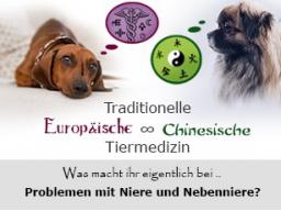 Webinar: gesHund  - Nieren und Nebennieren aus Sicht der TAM und TCM