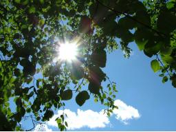 Webinar: Vitamin D - auch im Sommer ein Thema?