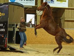Webinar: Bernd Hackl: Das sichere Verladen Deines Pferds - Videoanalyse und Fragerunde