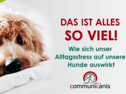 Webinar: Das ist alles so viel ! Wie sich unser Alltagsstress auf unseren Hund auswirkt.