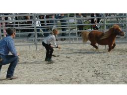 Webinar: Bernd Hackl: Die Bedeutung unserer Körpersprache in der Kommunikation mit Pferden