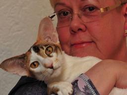Webinar: Die unsaubere Katze