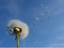 Webinar: Folge Deinen Träumen: Erfolg manifestieren