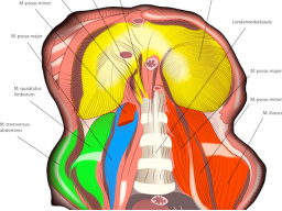 Webinar: Diaphragma - zentrale Spannungsregulation
