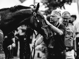 Webinar: Reportagen fotografieren mit Pferden