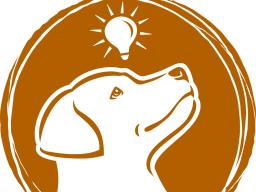 Webinar: 5 Übungen für deinen Hund unterwegs