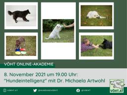 Webinar: Hundeintelligenz und originelle Beschäftigung für's Wohnzimmer