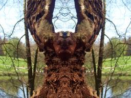 Webinar: Sinneskraft: Bäume des Lebens -