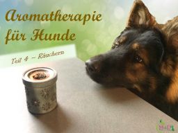 Webinar: Aromatherapie für Hunde Teil 4/4 - Räuchern
