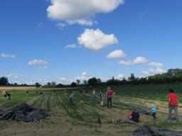 Webinar: Solidarische Landwirtschaft, selbstgemacht.