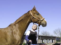 Webinar: Die homöopathische Begleitung alter Pferde