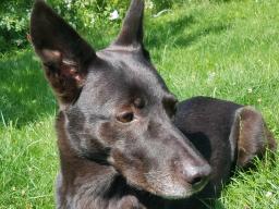 Webinar: Intuitive Energiearbeit für den Hund - Teil 2