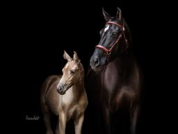 Webinar: Pferdefotografie vor schwarzem Hintergrund - Edle Portraits mit einfachen Mitteln