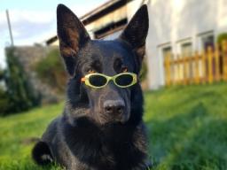 Webinar: Beschäftigungsideen für Hunde