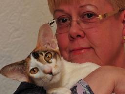 Webinar: Mykotherapie für Katzen und Hunde - ein Einblick