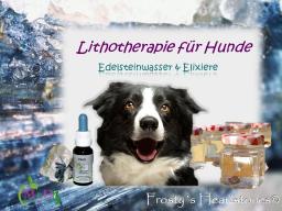 Webinar: Edelwasser und Edelsteinelixiere für Hunde