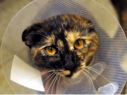 Webinar: Fälle aus der Tierheilpraxis Patient: Katze